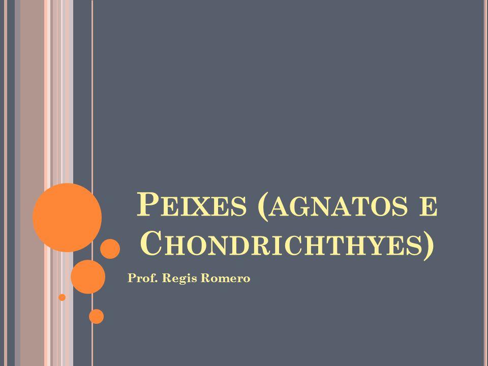 Peixes (agnatos e Chondrichthyes)