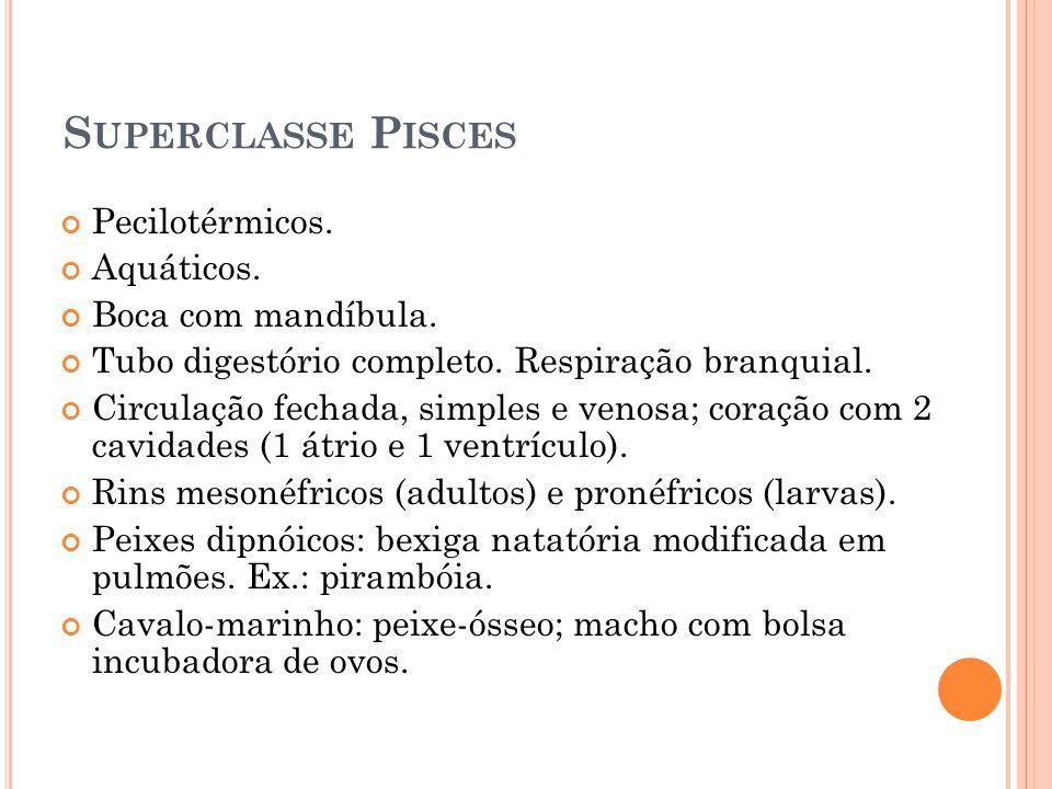 Superclasse Pisces Pecilotérmicos. Aquáticos. Boca com mandíbula.