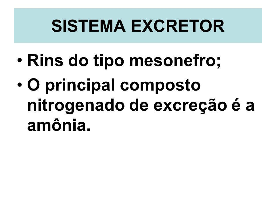 SISTEMA EXCRETOR Rins do tipo mesonefro; O principal composto nitrogenado de excreção é a amônia.