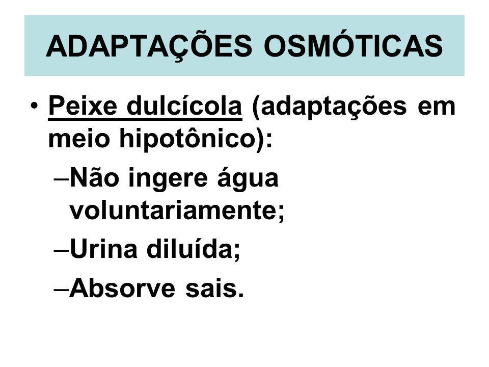 ADAPTAÇÕES OSMÓTICAS Peixe dulcícola (adaptações em meio hipotônico):