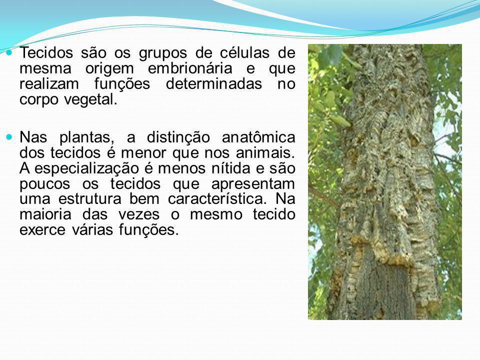 Tecidos são os grupos de células de mesma origem embrionária e que realizam funções determinadas no corpo vegetal.