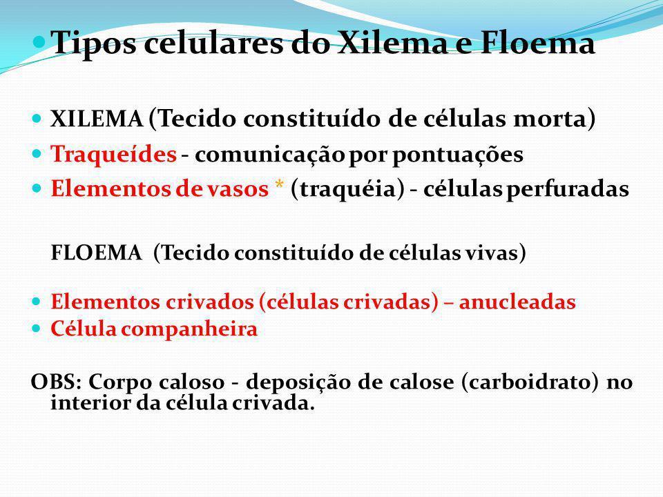 Tipos celulares do Xilema e Floema