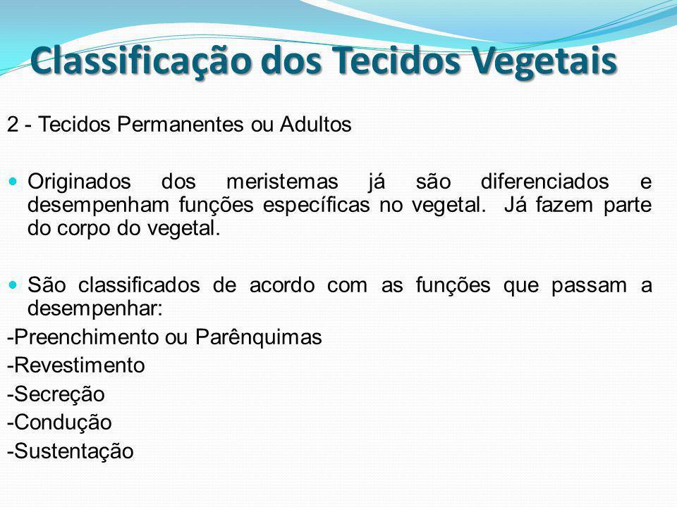 Classificação dos Tecidos Vegetais