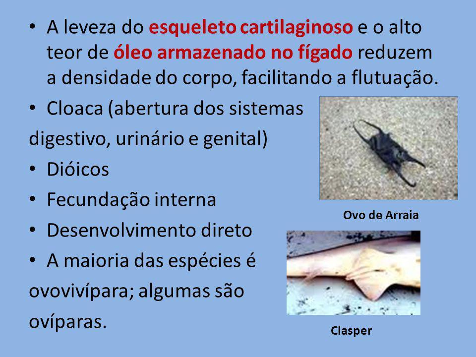 Cloaca (abertura dos sistemas digestivo, urinário e genital) Dióicos