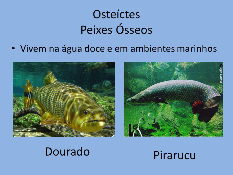 Osteíctes Peixes Ósseos