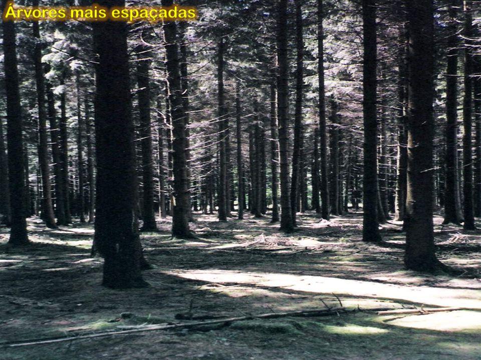 Árvores mais espaçadas