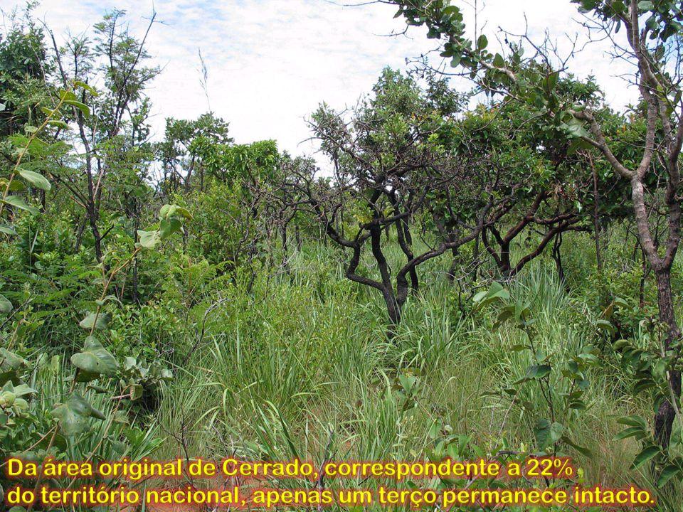 Da área original de Cerrado, correspondente a 22%