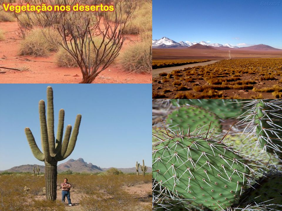 Vegetação nos desertos