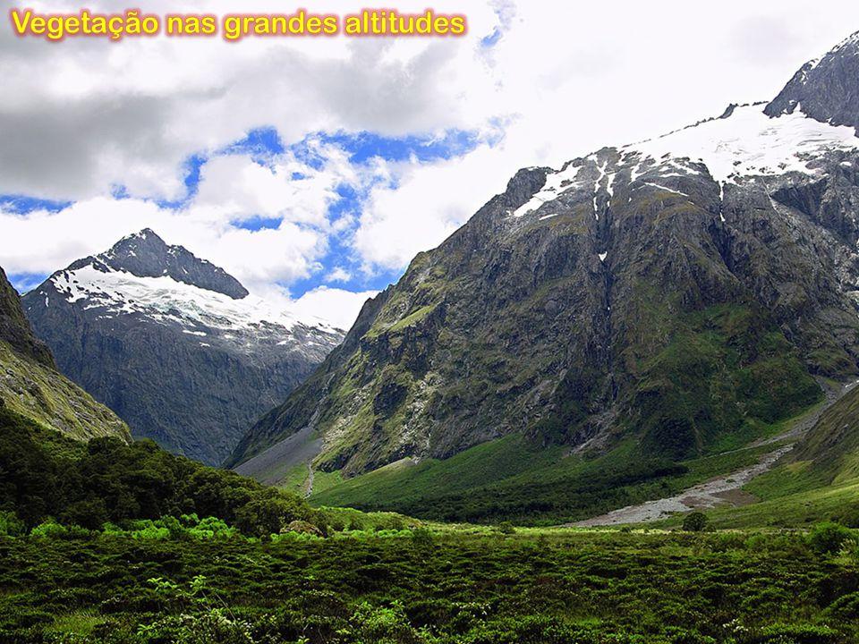 Vegetação nas grandes altitudes