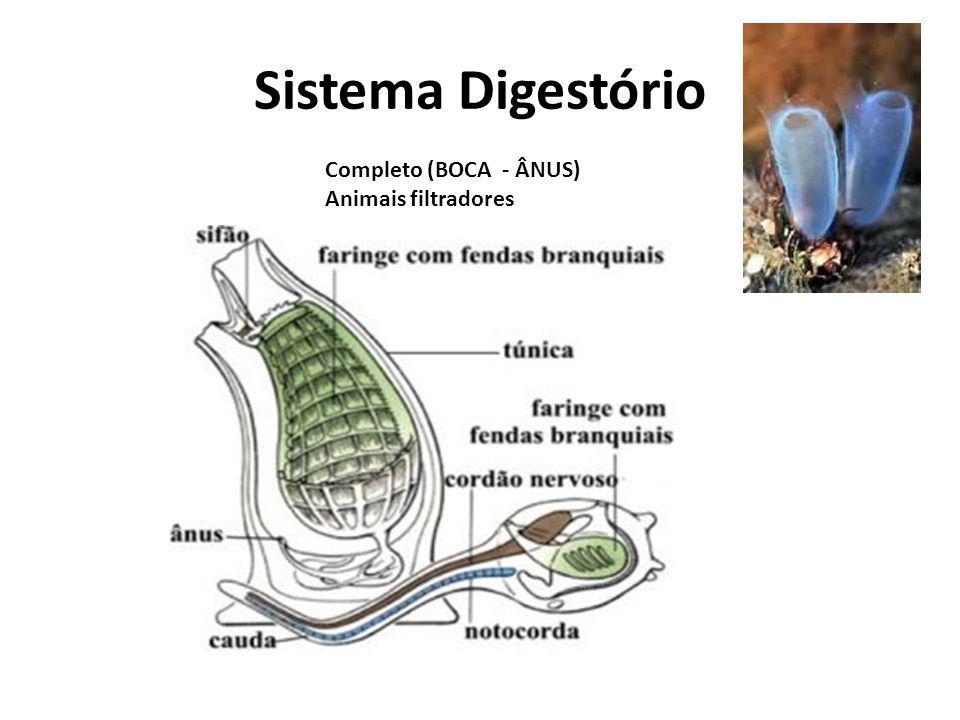 Sistema Digestório Completo (BOCA - ÂNUS) Animais filtradores