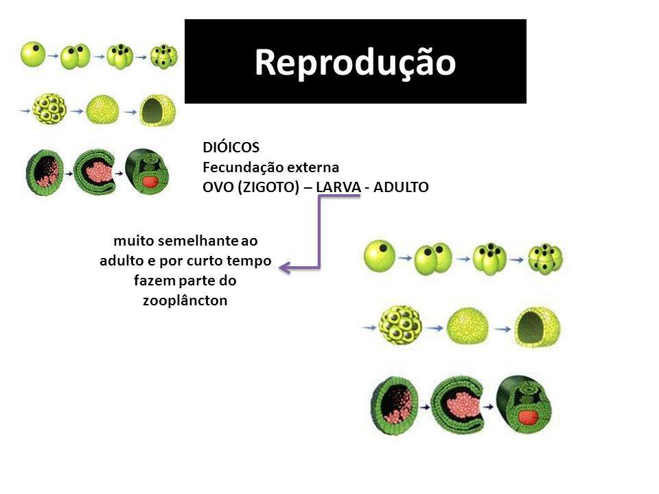 Reprodução DIÓICOS Fecundação externa OVO (ZIGOTO) – LARVA - ADULTO