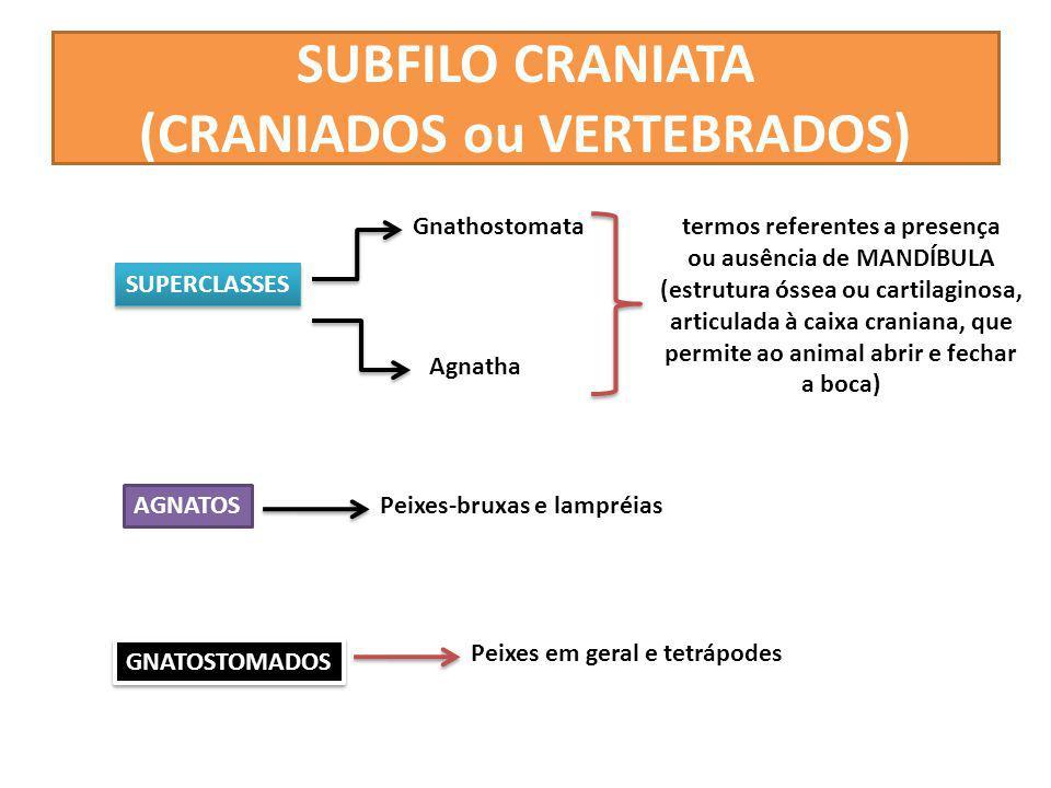 SUBFILO CRANIATA (CRANIADOS ou VERTEBRADOS)