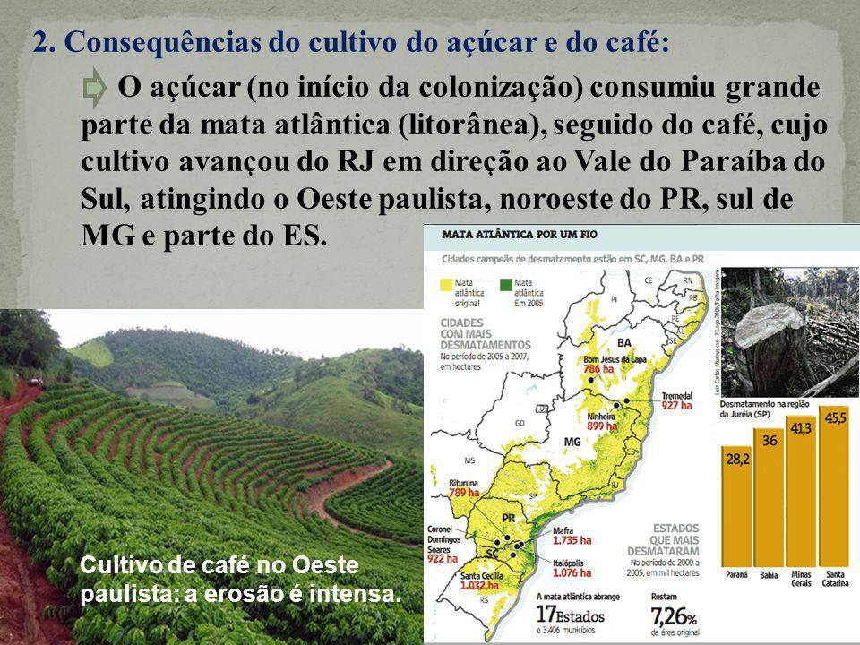 2. Consequências do cultivo do açúcar e do café: O açúcar (no início da colonização) consumiu grande parte da mata atlântica (litorânea), seguido do café, cujo cultivo avançou do RJ em direção ao Vale do Paraíba do Sul, atingindo o Oeste paulista, noroeste do PR, sul de MG e parte do ES.