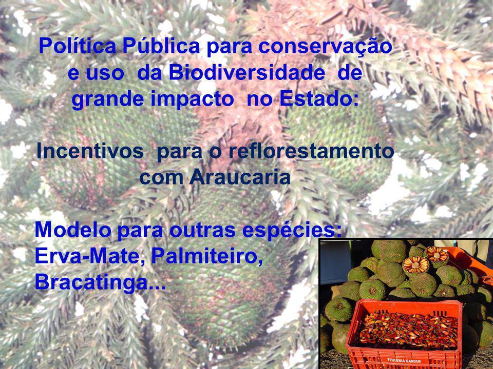 Incentivos para o reflorestamento com Araucaria