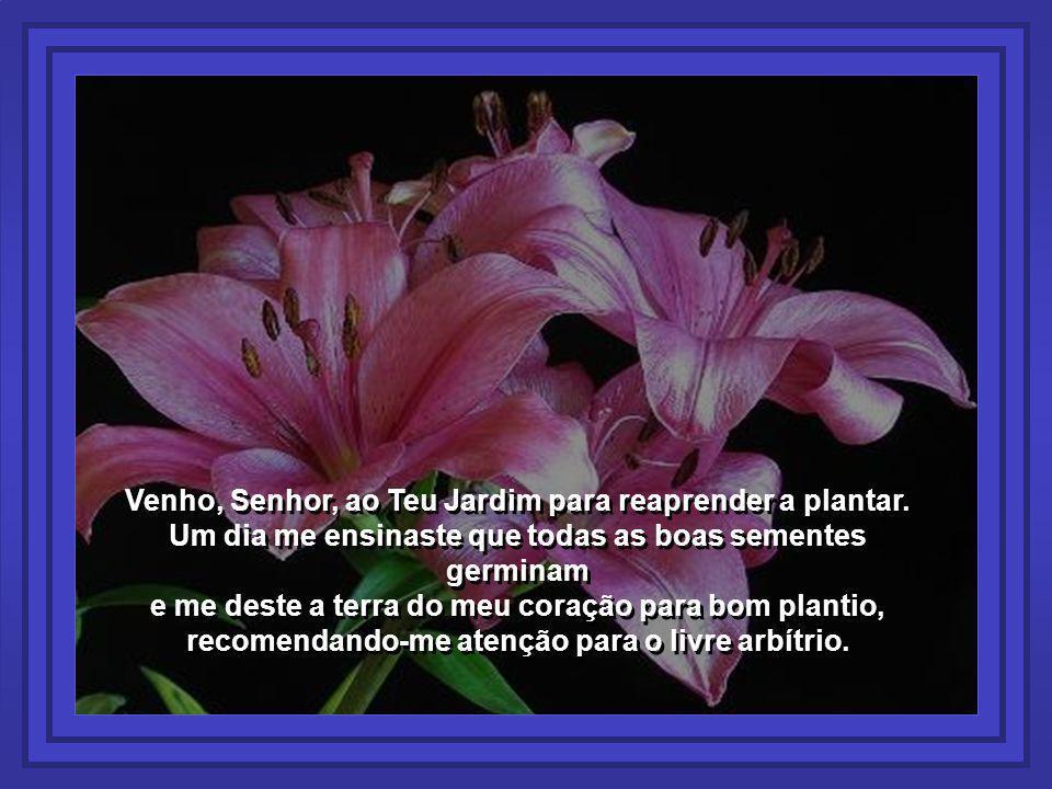 Venho, Senhor, ao Teu Jardim para reaprender a plantar