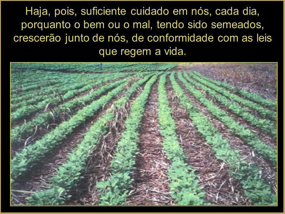 Haja, pois, suficiente cuidado em nós, cada dia, porquanto o bem ou o mal, tendo sido semeados, crescerão junto de nós, de conformidade com as leis que regem a vida.