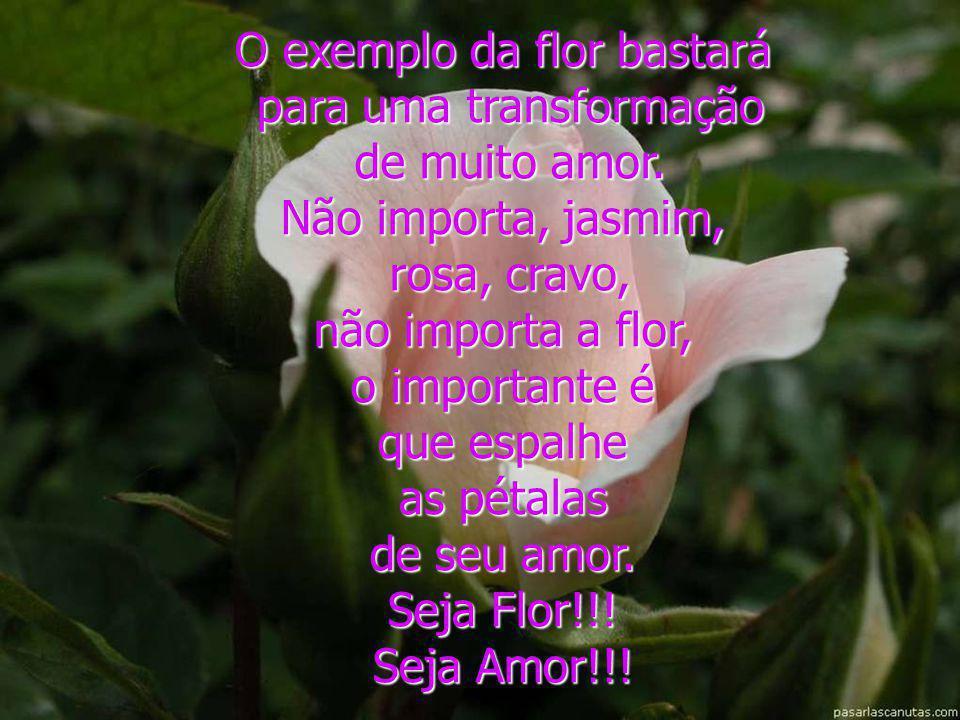 O exemplo da flor bastará para uma transformação de muito amor.