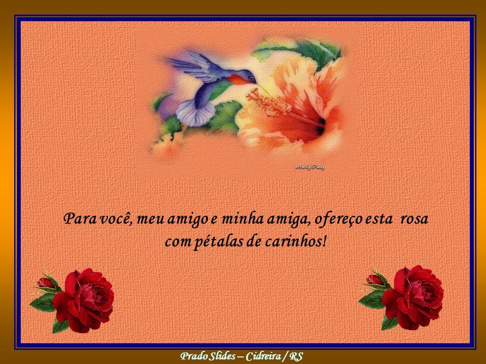 Para você, meu amigo e minha amiga, ofereço esta rosa com pétalas de carinhos!