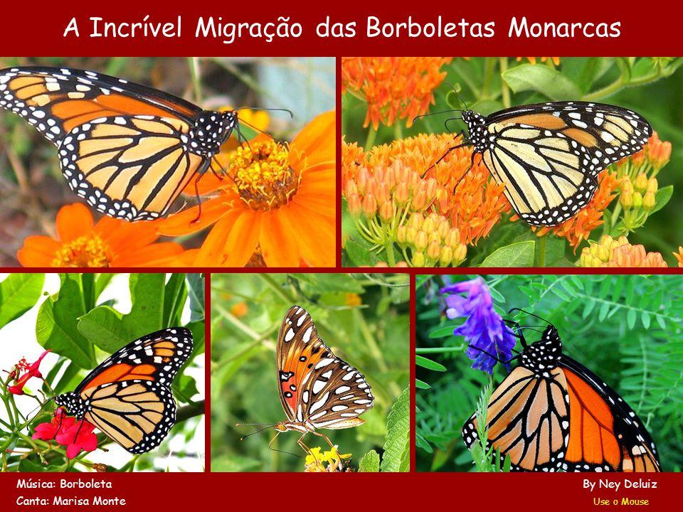 A Incrível Migração das Borboletas Monarcas