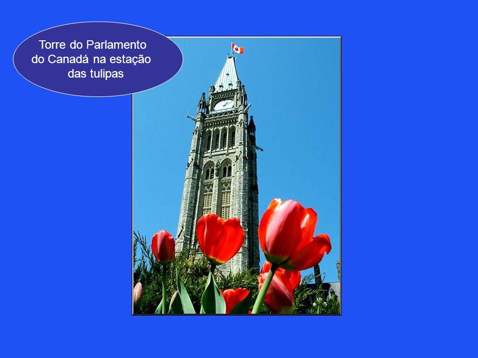 Torre do Parlamento do Canadá na estação das tulipas