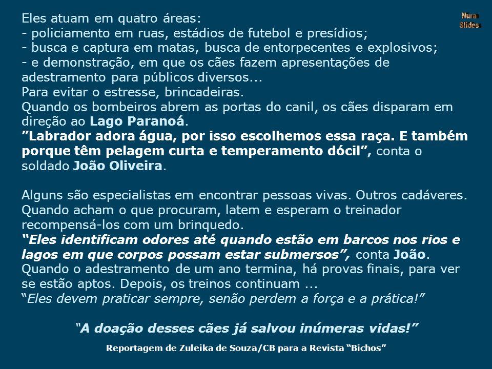 Reportagem de Zuleika de Souza/CB para a Revista Bichos