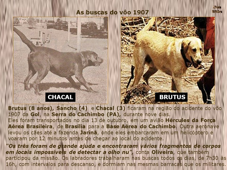 As buscas do vôo 1907 CHACAL BRUTUS