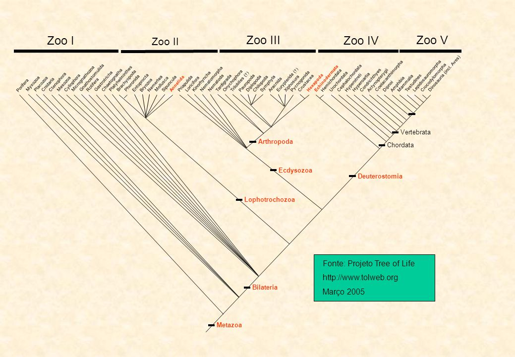 Zoo I Zoo III Zoo IV Zoo V Zoo II Fonte: Projeto Tree of Life