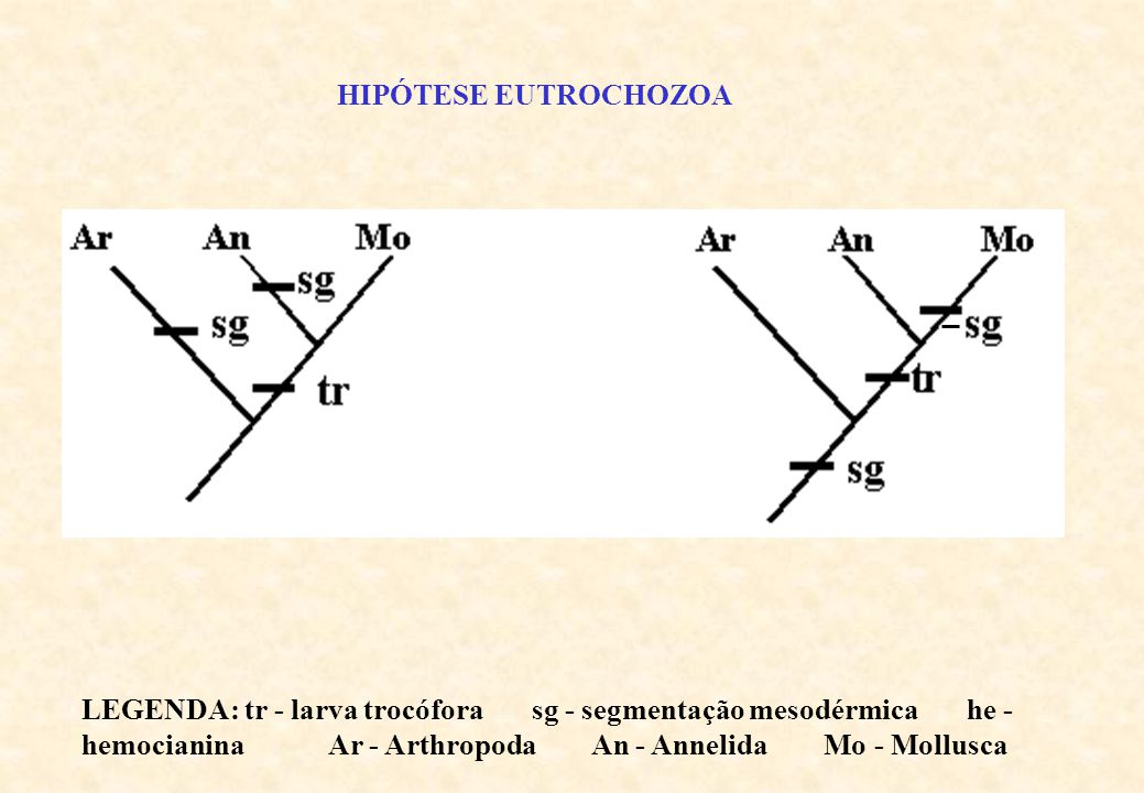 HIPÓTESE EUTROCHOZOA