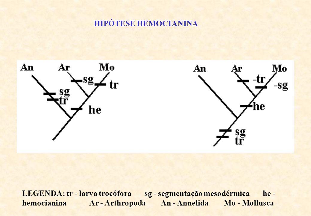 HIPÓTESE HEMOCIANINA