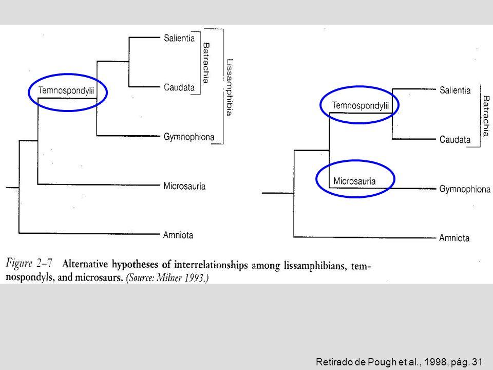 Retirado de Pough et al., 1998, pág. 31