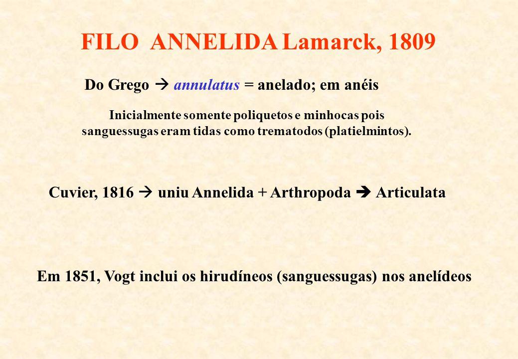 FILO ANNELIDA Lamarck, 1809 Do Grego  annulatus = anelado; em anéis