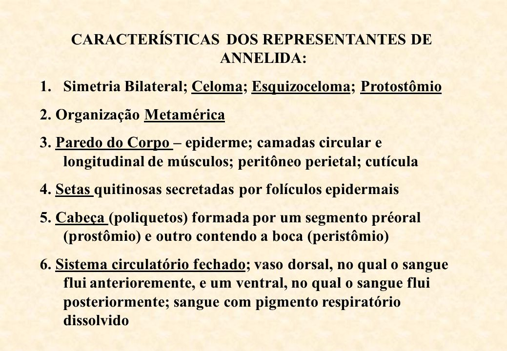 CARACTERÍSTICAS DOS REPRESENTANTES DE ANNELIDA: