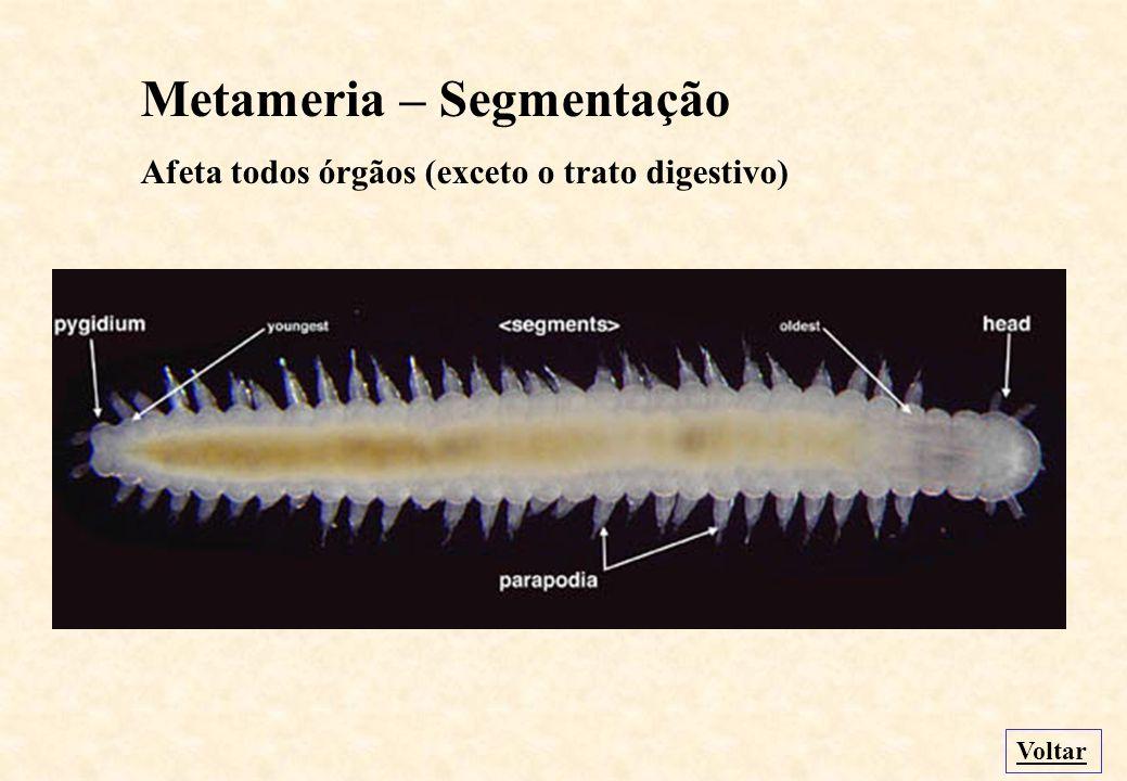 Metameria – Segmentação