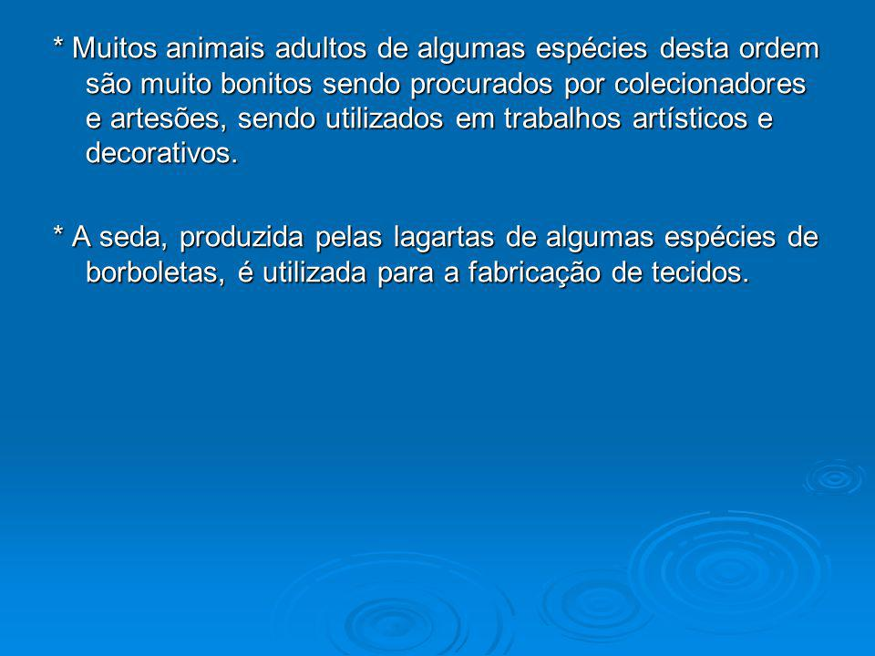 * Muitos animais adultos de algumas espécies desta ordem são muito bonitos sendo procurados por colecionadores e artesões, sendo utilizados em trabalhos artísticos e decorativos.