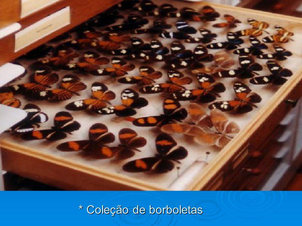 * Coleção de borboletas