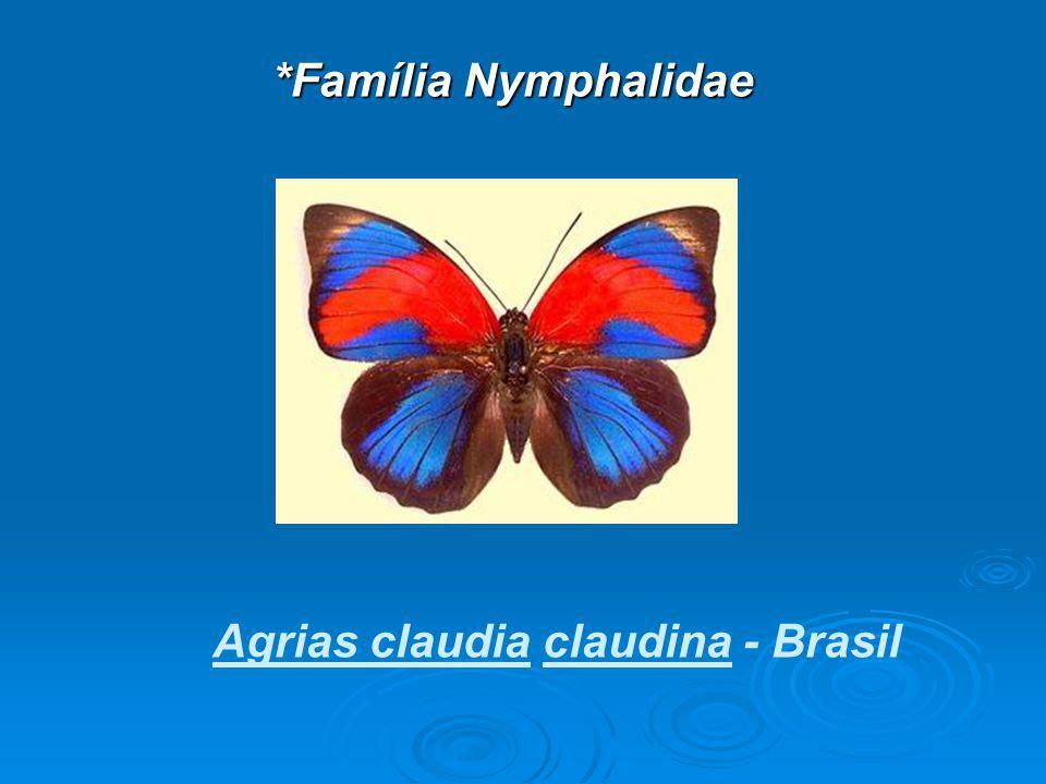 Agrias claudia claudina - Brasil