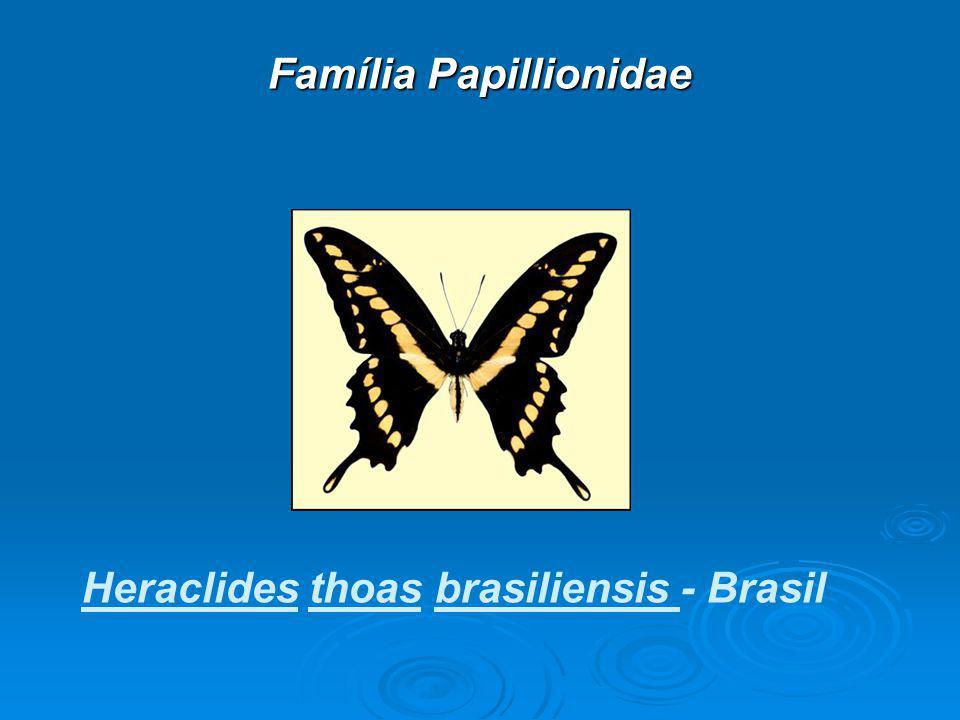 Família Papillionidae