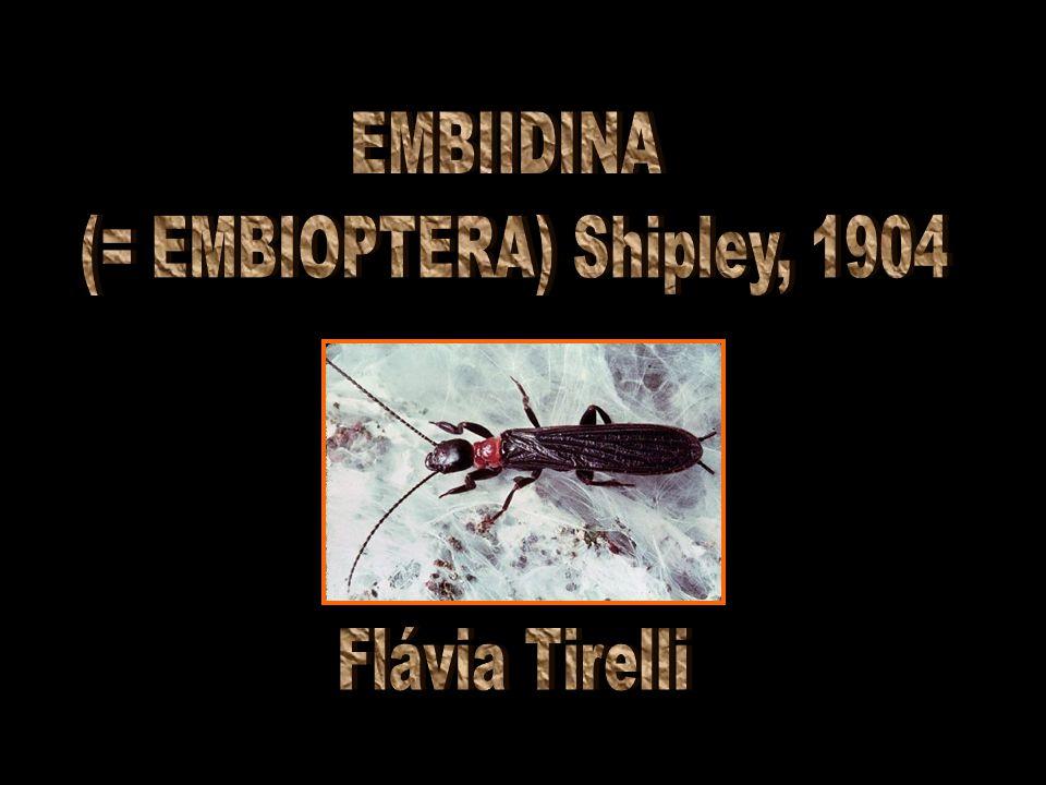 (= EMBIOPTERA) Shipley, 1904