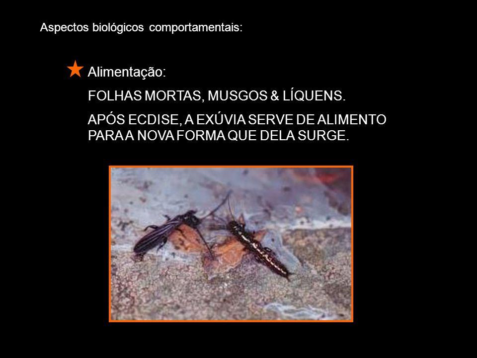 FOLHAS MORTAS, MUSGOS & LÍQUENS.