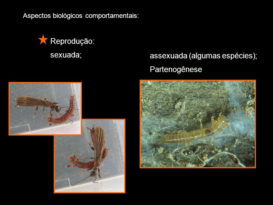 assexuada (algumas espécies); Partenogênese