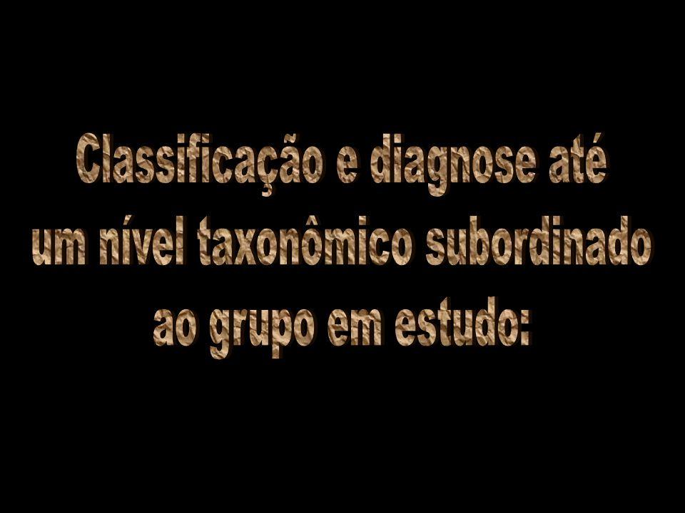 Classificação e diagnose até um nível taxonômico subordinado