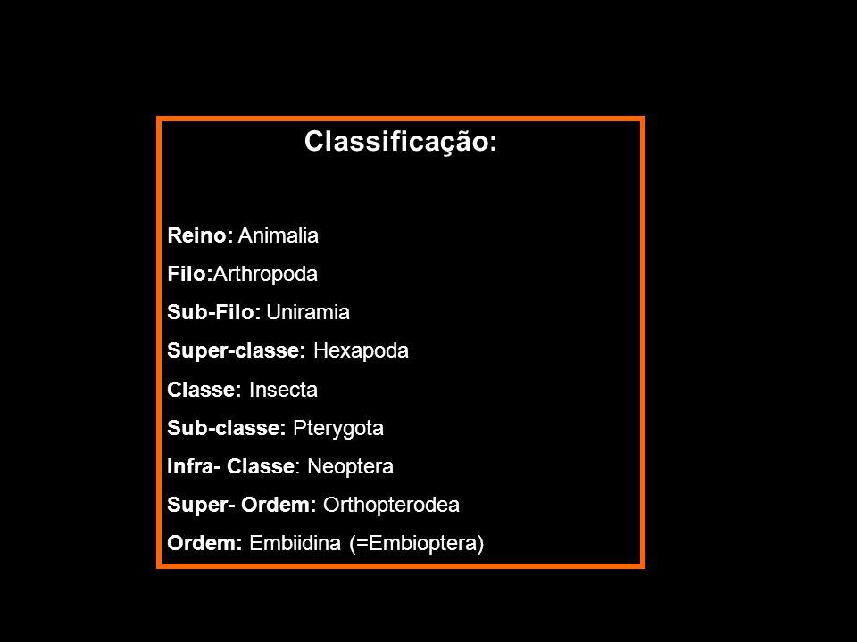 Classificação: Reino: Animalia Filo:Arthropoda Sub-Filo: Uniramia