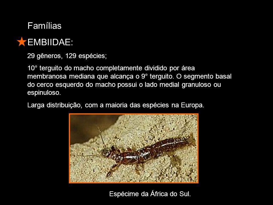 Famílias EMBIIDAE: 29 gêneros, 129 espécies;
