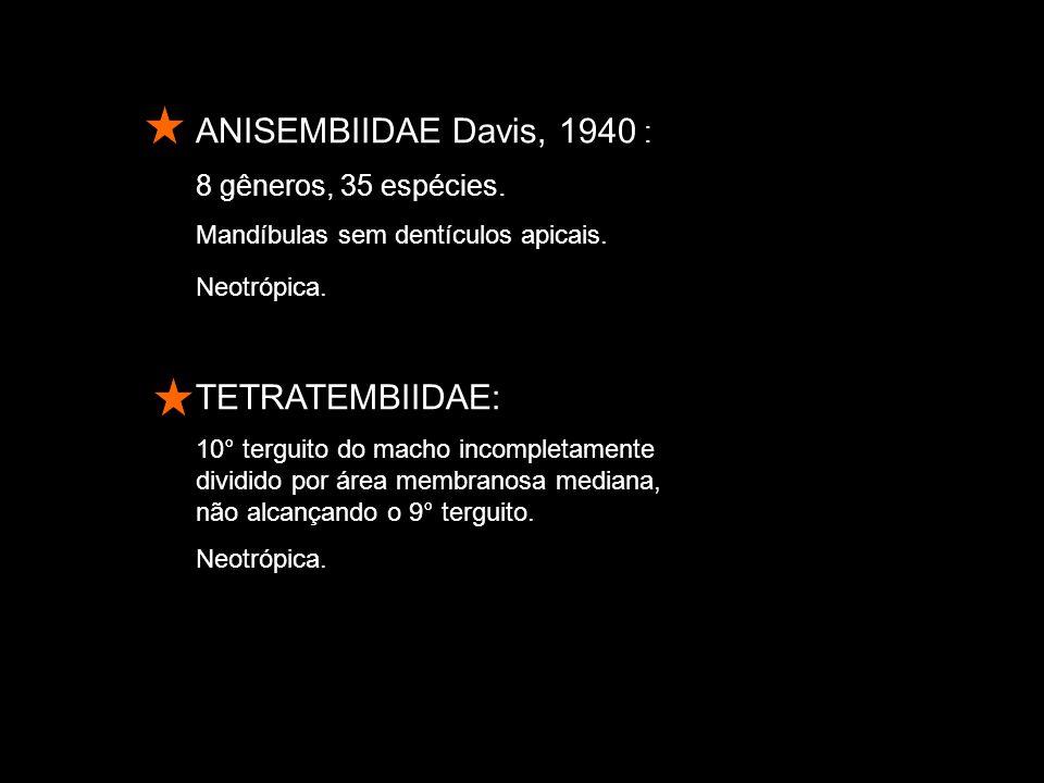 ANISEMBIIDAE Davis, 1940 : TETRATEMBIIDAE: 8 gêneros, 35 espécies.