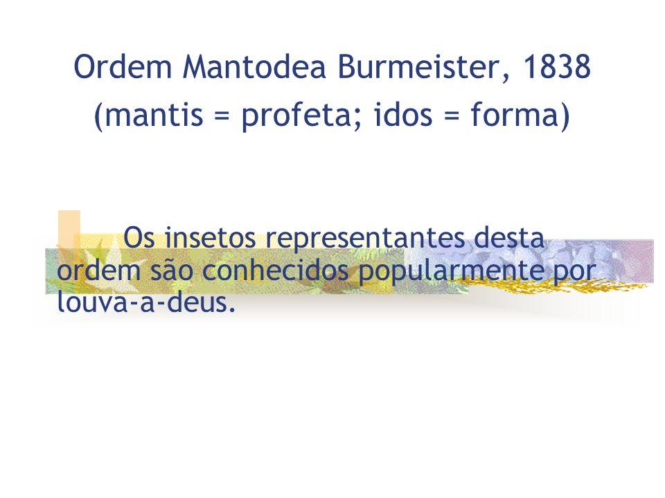 Ordem Mantodea Burmeister, 1838