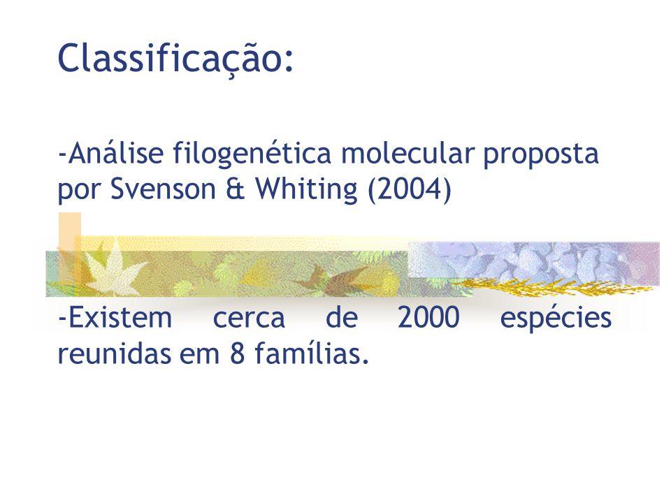 Classificação: -Análise filogenética molecular proposta por Svenson & Whiting (2004) -Existem cerca de 2000 espécies reunidas em 8 famílias.