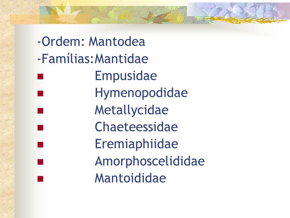-Ordem: Mantodea -Famílias: Mantidae. Empusidae. Hymenopodidae. Metallycidae. Chaeteessidae. Eremiaphiidae.