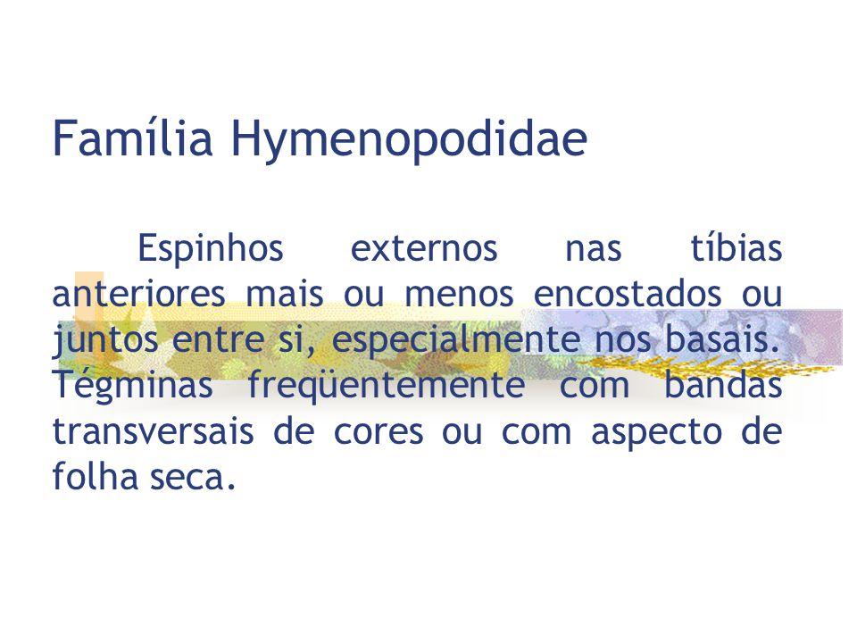 Família Hymenopodidae