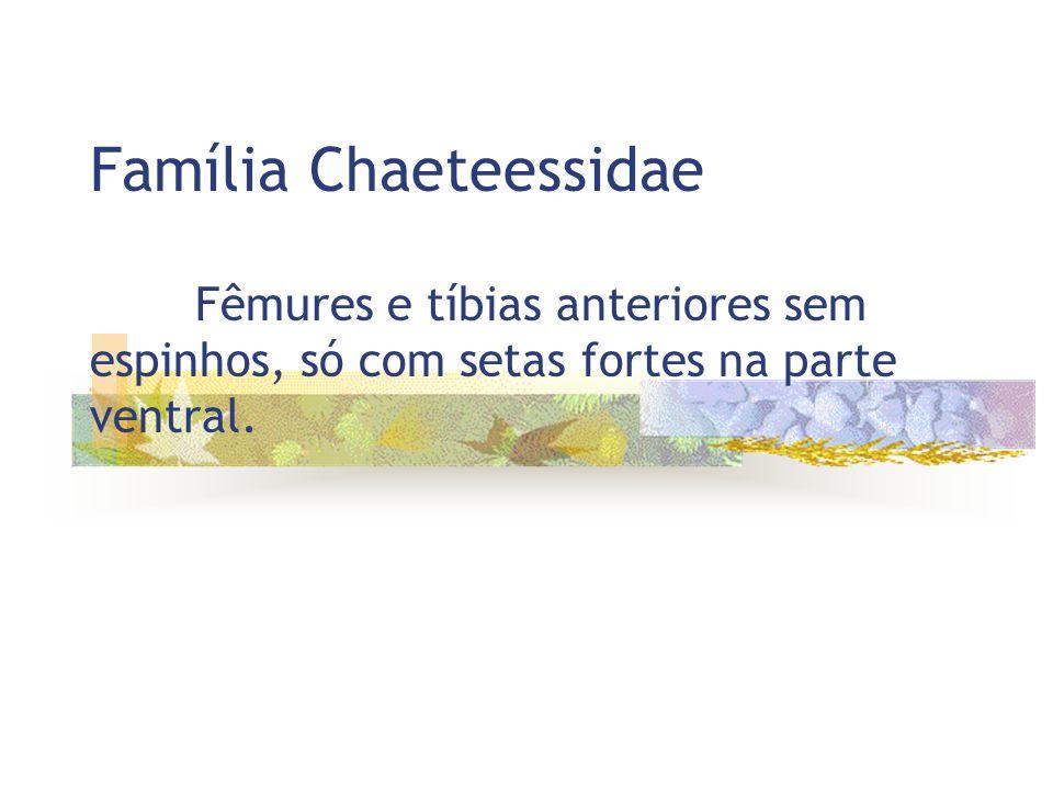 Família Chaeteessidae