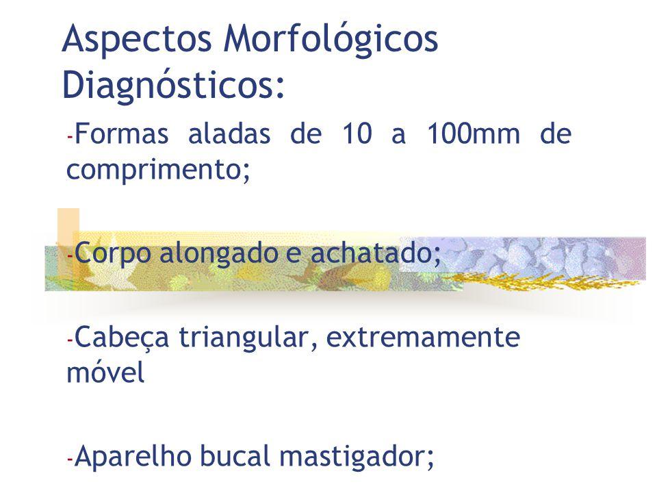 Aspectos Morfológicos Diagnósticos: